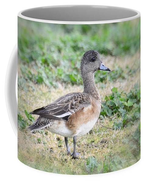 Female American Wigeon Coffee Mug featuring the photograph Female American Wigeon by Saija Lehtonen