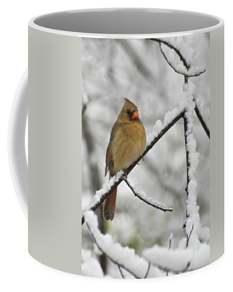 Adult Coffee Mug featuring the photograph Female Cardinal 3656 by Michael Peychich