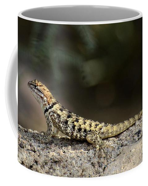 Desert Spiny Lizard Coffee Mug featuring the photograph Female Desert Spiny Lizard by Saija Lehtonen