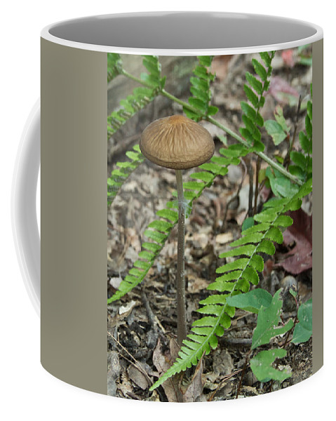 Fungi Coffee Mug featuring the photograph Fern Frond And Mushroom 5 by Douglas Barnett