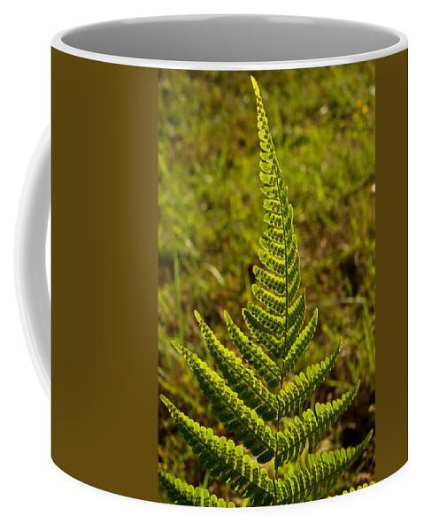 Fern Coffee Mug featuring the photograph Fern Frond And Sporangia 1 by Douglas Barnett
