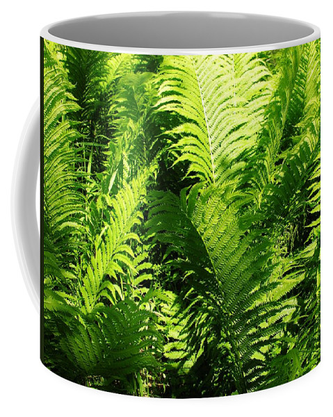 Ferns Coffee Mug featuring the photograph Ferns by Sherman Perry