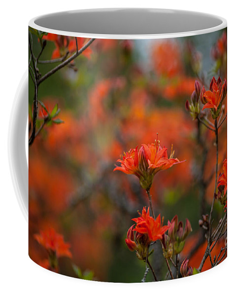 Rhodies Coffee Mug featuring the photograph Fiery Spring by Mike Reid