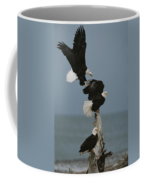 Animals Coffee Mug featuring the photograph Fighting For A Space, A Northern by Norbert Rosing