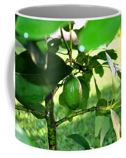 Avocado Coffee Mug featuring the photograph First Avocado by Mickey Krause