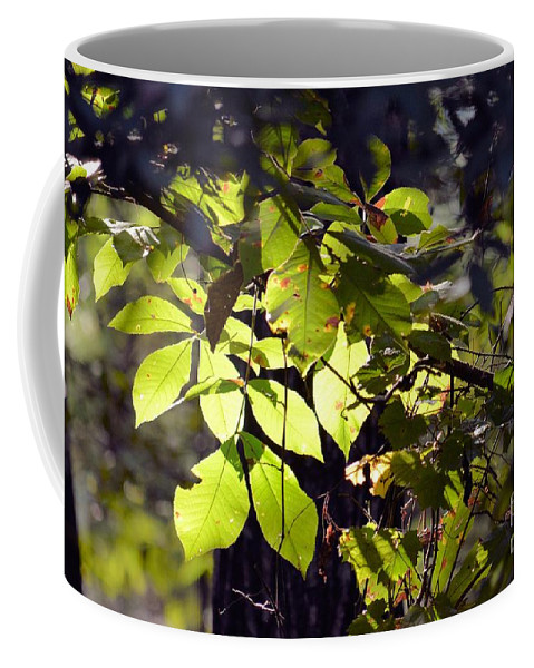 First Morns Light Coffee Mug featuring the photograph First Morns Light by Maria Urso
