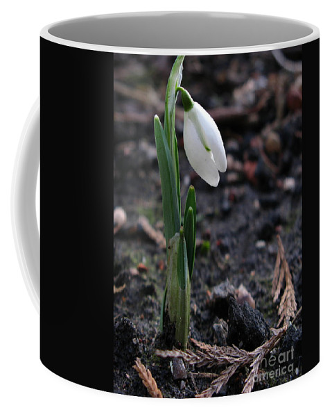 First Snowdrop Coffee Mug featuring the photograph First Snowdrop by John Chatterley