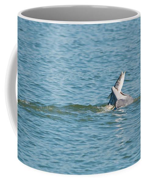 Dolphin Coffee Mug featuring the photograph Fish On by Christine Stonebridge