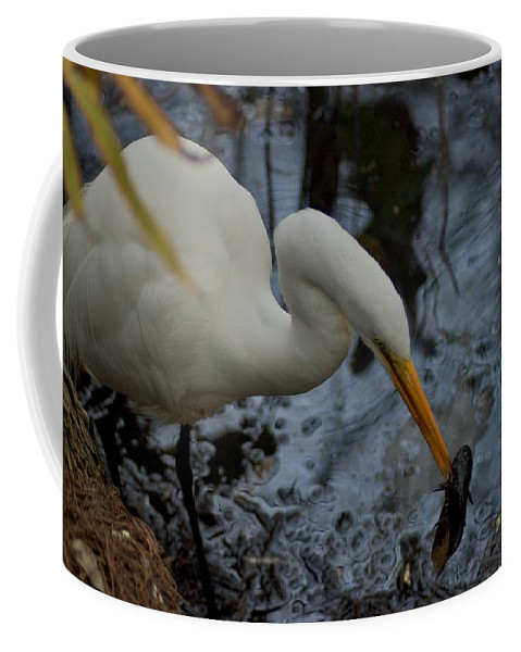 Audobon Corkscrew Swamp Sanctuary Coffee Mug featuring the photograph Fishing by Joseph Yarbrough