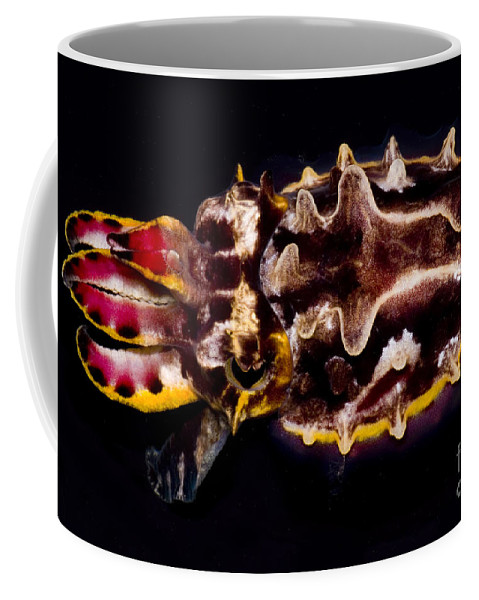 Flower Cuttlefish Coffee Mug featuring the photograph Flamboyant Cuttlefish by Dante Fenolio