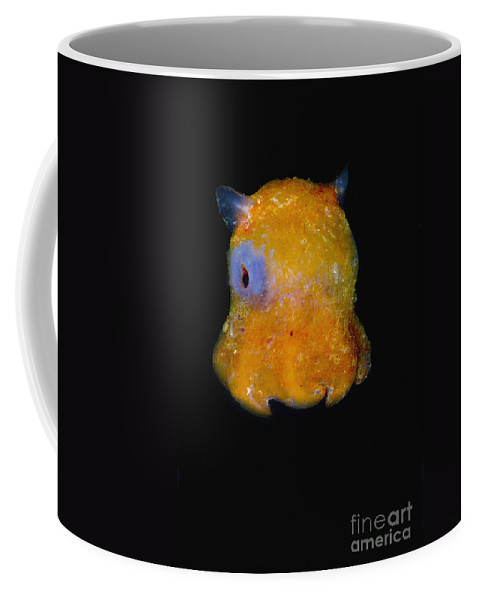 Octopod Coffee Mug featuring the photograph Flapjack Octopus by Dante Fenolio
