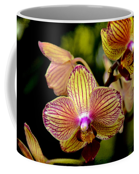 Coffee Mug featuring the photograph Flirting by Angelina Vick