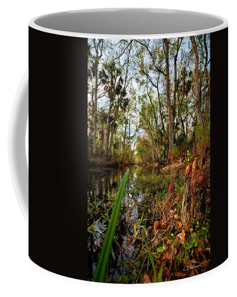 Stream Coffee Mug featuring the photograph Florida Stream by Christopher Holmes