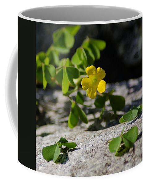 Flower Coffee Mug featuring the photograph Flower And Dancing Clover by LeeAnn McLaneGoetz McLaneGoetzStudioLLCcom