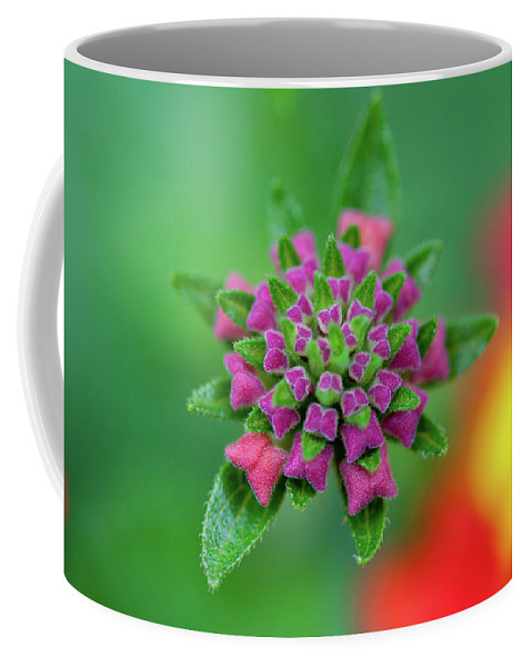Purple Coffee Mug featuring the photograph Flower Pop by Pam Fong
