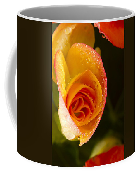 Bright Coffee Mug featuring the photograph Flower Rieger Begonia 5 by John Brueske