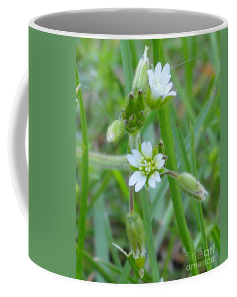 Flower Coffee Mug featuring the photograph Flowers Of The Grass by Meandering Photography