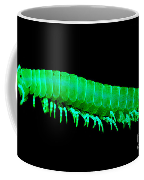 Motyxia Sequoia Alia Coffee Mug featuring the photograph Fluorescent Millipede by Dante Fenolio