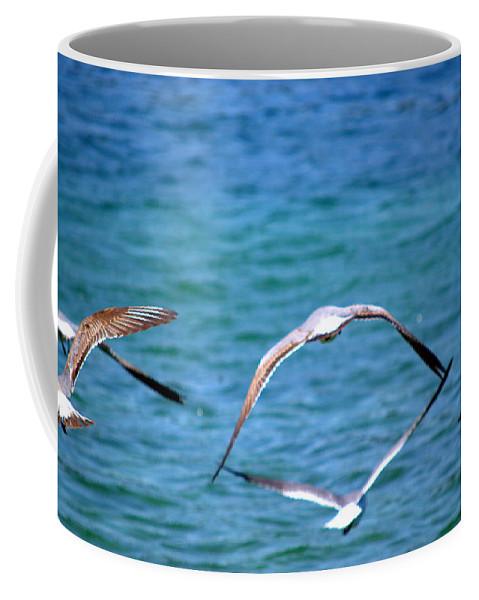 Seagulls Coffee Mug featuring the photograph Fly Away Home by Kari Tedrick