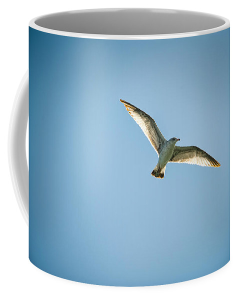 Bird Coffee Mug featuring the photograph Fly by Cindy Tiefenbrunn