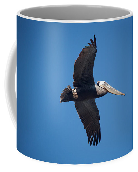 Pelican Coffee Mug featuring the photograph flying Pelican by Ralf Kaiser