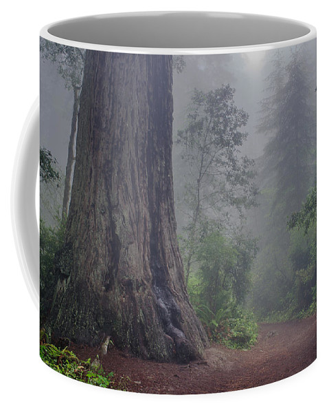 Lady Bird Johnson Grove Coffee Mug featuring the photograph Fog And Redwoods by Greg Nyquist