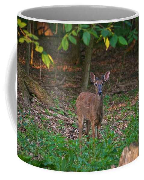 Animal Coffee Mug featuring the photograph Forest Edge 7365 1754 by Michael Peychich