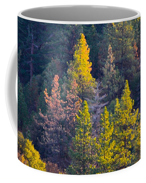 Mountain Coffee Mug featuring the photograph Forest Foliage by Sarah Vandenbusch
