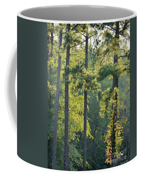 Forest Coffee Mug featuring the photograph Forest Illumination At Sunset by Maria Urso