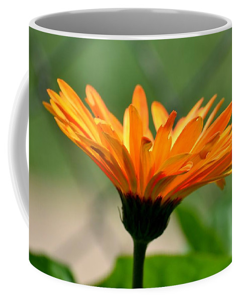 Fountain-shaped Coffee Mug featuring the photograph Fount Of Orange by Maria Urso