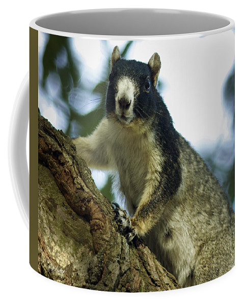 Beaufort County Coffee Mug featuring the photograph Fox Squirrel by Phill Doherty