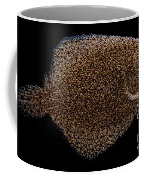 Freshwater Flounder Coffee Mug featuring the photograph Freshwater Flounder by Dant� Fenolio