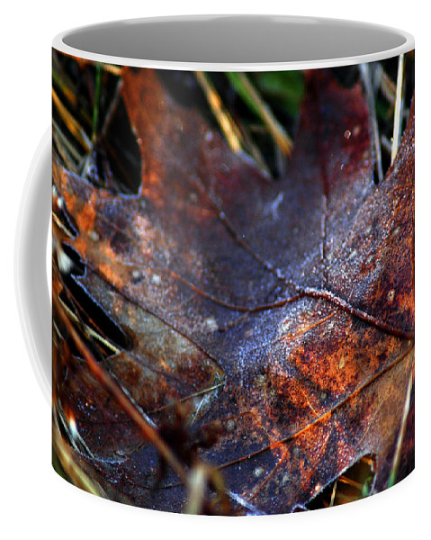 Brown Coffee Mug featuring the photograph Frosted Fall by LeeAnn McLaneGoetz McLaneGoetzStudioLLCcom