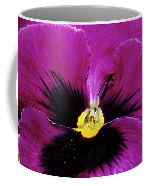 Pansy Coffee Mug featuring the photograph Fuchsia Pansy by Phyllis Denton