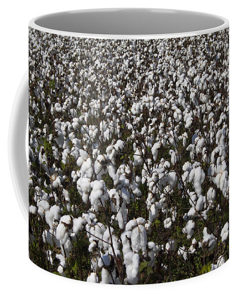 Cotton Coffee Mug featuring the photograph Full Frame Alabama Cotton Crop by Kathy Clark