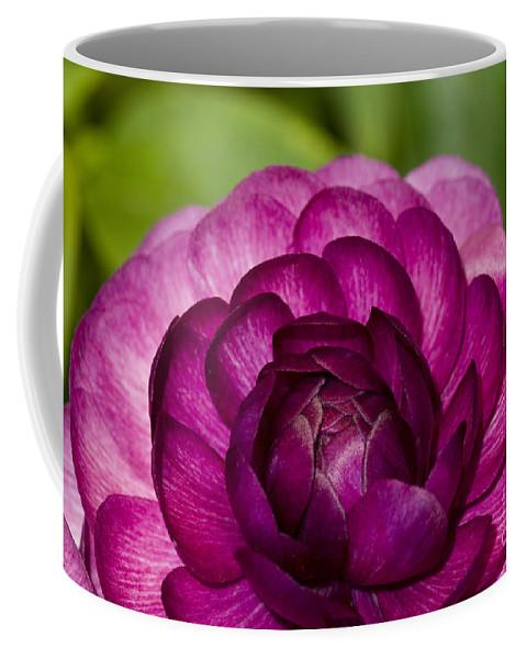 Bronstein Coffee Mug featuring the photograph Garden Beauty by Sandra Bronstein