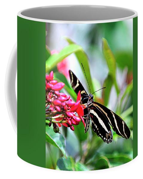 Garden Coffee Mug featuring the photograph Garden Zebra Longwing by Bill Dodsworth