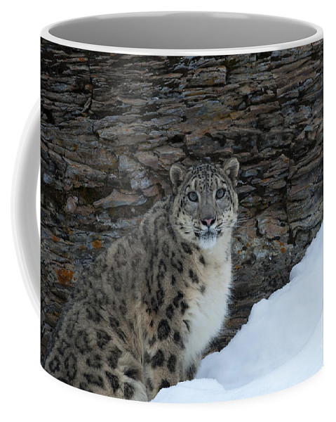 Sandra Bronstein Coffee Mug featuring the photograph Gaze Of The Snow Leopard by Sandra Bronstein