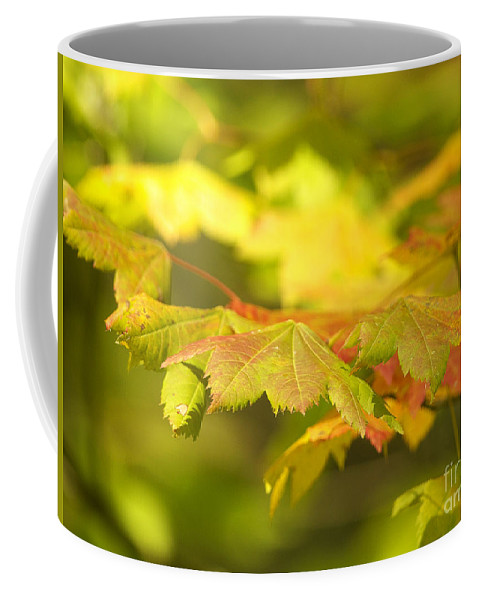 Maple Leaves Coffee Mug featuring the photograph Gentle Glow by Sharon Talson