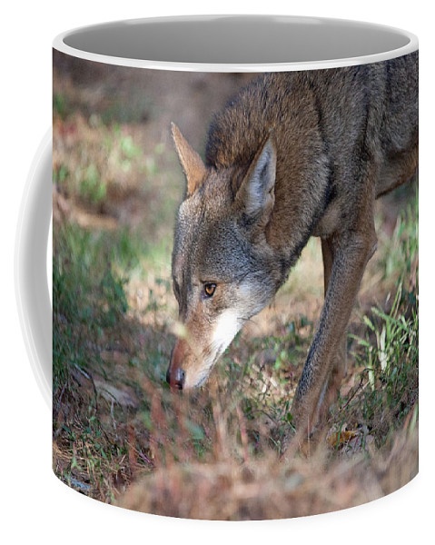 Wolf Coffee Mug featuring the photograph Gentle Wolf by Karol Livote