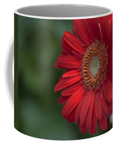 Flower Coffee Mug featuring the photograph Gerbera 4 by Sherry Fain
