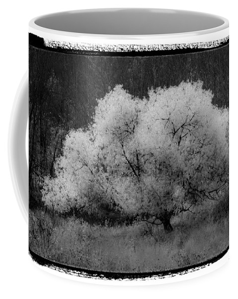 Appalachia Coffee Mug featuring the photograph Ghost Tree by Debra and Dave Vanderlaan