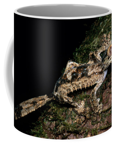 Giant Leaf Tail Gecko Coffee Mug featuring the photograph Giant Leaf Tail Gecko by Dante Fenolio
