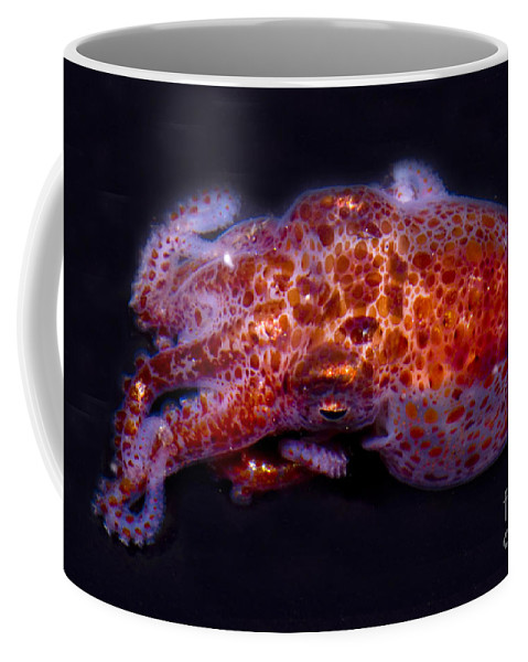 Giant Pacific Octopus Coffee Mug featuring the photograph Giant Pacific Octopus by Dante Fenolio