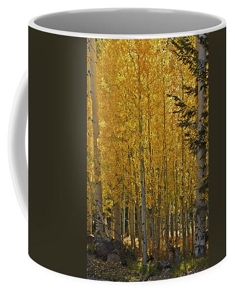 Aspens Coffee Mug featuring the photograph Glorious Aspens by Phyllis Denton