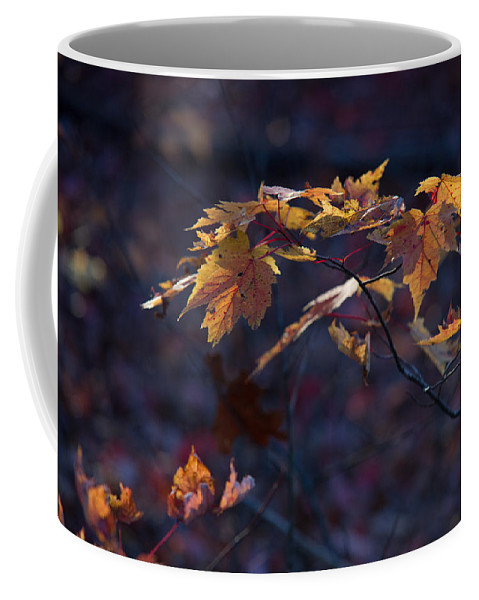 Glowing Coffee Mug featuring the photograph Glowing Maple Leaves by Douglas Barnett