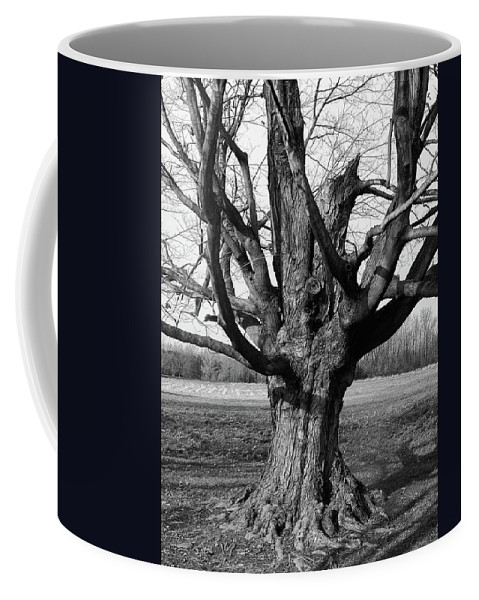 Tree Coffee Mug featuring the photograph Gnarly 2154 by Guy Whiteley