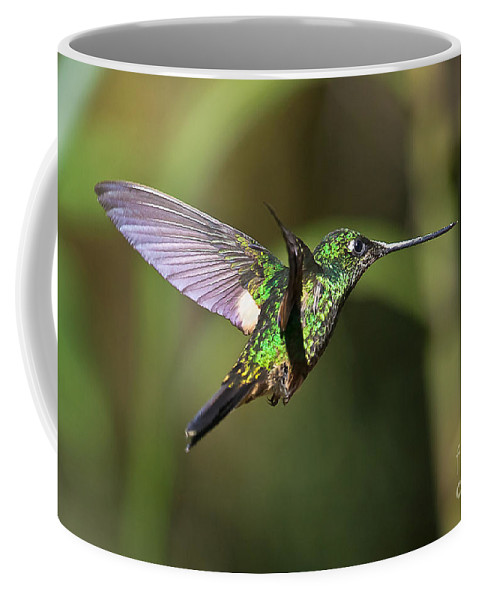 Animal Coffee Mug featuring the photograph Golden-breasted Puffleg by Jean-Luc Baron