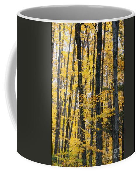 Fall Colors Coffee Mug featuring the photograph Golden Forest by Optical Playground By MP Ray