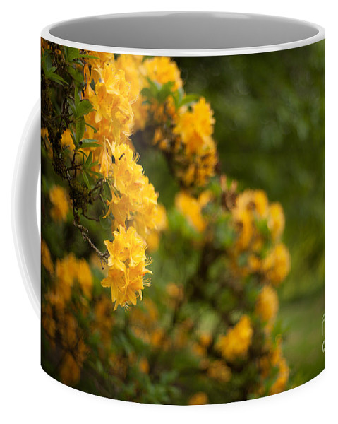 Rhodies Coffee Mug featuring the photograph Golden Glow by Mike Reid